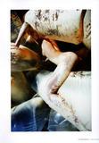 Жиневье Ван Синус, фото 15. Guinevere Van Seenus, photo 15